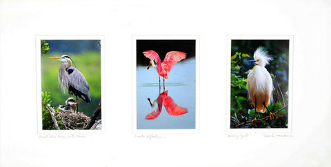 Triple Print Wildlife Series