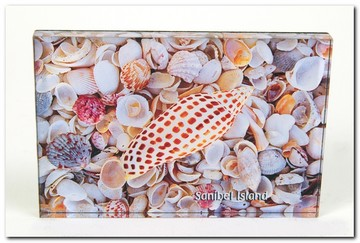 Post Card Sanibel Island Junonia