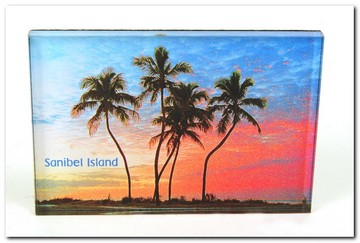 Post Card Sanibel Island Palms