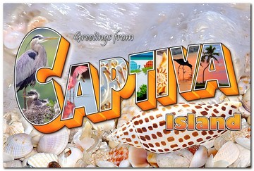 Greetings From Captiva - Shells