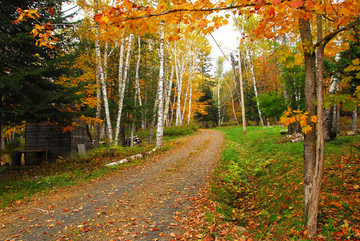 Country Lane in Maine