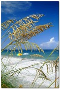 Sea Oats Siesta